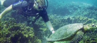 Diving with Turtles in Mauritius